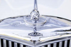 Symbol of jaguar stock image