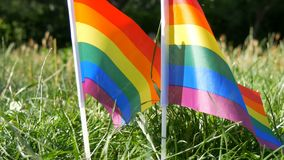 Symbol of LGBT Gay lesbian transgender queer rights, activism love equality and freedom rainbow flags on the grass lawn. Swaying in the wind on a warm summer stock video footage