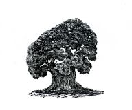 A lonely tree. Drawing of a powerful tree. A symbol of life, growth and wisdom. A big old tree. The beginning of a new book Royalty Free Stock Photography