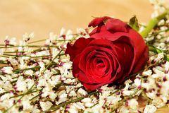 Symbol of love and desire. Red rose on spring flowers background, suggesting desire for love and beauty stock photos