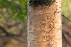 Symbol of love engraved on a tree. In the forest at sunset Royalty Free Stock Images