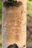 Symbol of love engraved on a tree - Vertical. Symbol of love engraved on a tree in the forest at sunset Royalty Free Stock Photography