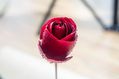 Symbol of love and romantic feelings red rose petals macro picture with water drops Royalty Free Stock Photography
