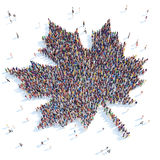 Symbol   maple leaf. Stock Images