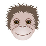 Symbol of 2016. Monkey head. The head of a monkey on a white background stock image