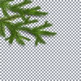 Symbol of the New Year and Christmas. two green lush branches spruce on a checker background. illustration Royalty Free Stock Photography