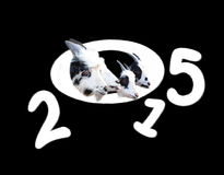 Symbol new year 2015. Fluffy figures of new year with goats Stock Illustration