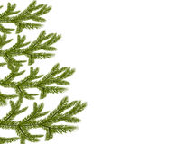 Symbol of the New Year. Four green lush branches spruce.  Stock Photo
