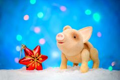 Symbol of 2019 new year pig with a Christmas star on a blue background. Symbol 2019 new year`s cute pig with a Christmas red star in the snow on a blue stock photography