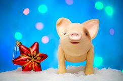 Symbol of 2019 new year pig with a Christmas star on a blue background. Symbol 2019 new year`s cute pig with a Christmas red star in the snow on a blue royalty free stock photography
