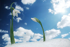 Symbol Of Spring Royalty Free Stock Images