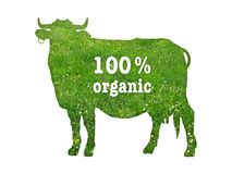 Symbol of organic beef. Realistic silhouette of a cow on a pasture background with the inscription 100 percent organic Vector Illustration