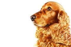 Symbol rok 2018 Żółty pies Zdjęcia Royalty Free