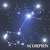 Symbol Scorpius Zodiac Sign. Vector Illustration. Royalty Free Stock Image
