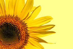 Symbol of Summer Royalty Free Stock Images