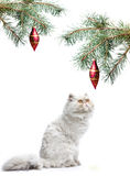 A symbol of year 2011 white cat stock photo