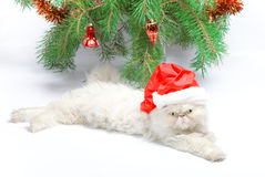 Symbol of year 2011 white cat Royalty Free Stock Image