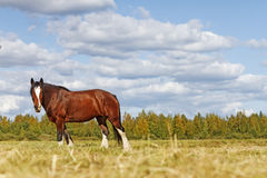 Symbol year. Horse ,Landscape,Finland travel scandinavia finland Royalty Free Stock Images