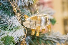 Symbol of the year of the Pig. Christmas decorations-a symbol of the year of the pig .Christmas background with Symbol of the year stock images