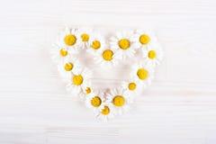 Symbole d'amour de marguerite Photos stock