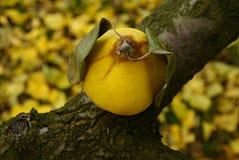 Symbole d'automne Images libres de droits