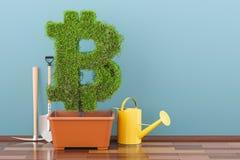 Symbole de Bitcoin dans le pot de fleurs avec la boîte d'arrosage rendu 3d Image libre de droits