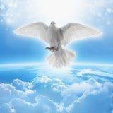 Symbole de colombe de blanc de l'amour et de la paix Photos libres de droits