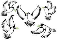 Symbole de colombe de paix et de liberté Images libres de droits