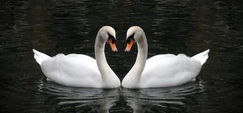 Symbole de cygne de l'amour Image libre de droits