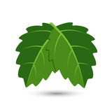 Symbole de feuille de vert d'écologie sur un fond blanc Images libres de droits