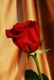 Symbole de pureté de rose de rouge, fond élégant Photos libres de droits