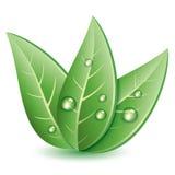 Symbole des feuilles vertes illustration stock