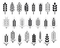 symbole dla loga projekta banatki Rolnictwo, kukurudza, jęczmień, badyle, organicznie rośliny, chleb, jedzenie, naturalny żniwo,  Obrazy Stock