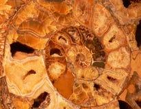 Symbole en spirale de Dreamstime Photo libre de droits