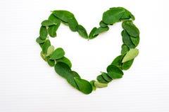 Symbole/feuilles de coeur photographie stock libre de droits