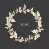 Symbole floral royal de vecteur Branche de café, haricot Photos libres de droits