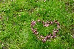 Symbole romantique de coeur fait de pétales roses de fleur de siliquastrum de Cercis sur le fond d'herbe verte avec l'espace libr Photographie stock
