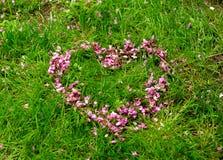 Symbole romantique de coeur fait de pétales roses de fleur de siliquastrum de Cercis sur le fond d'herbe verte horizontal Photographie stock