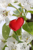 Symbole rouge de coeur Photo stock