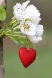 Symbole rouge de coeur image stock