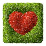 Symbole rouge de coeur dans des feuilles vertes Photos libres de droits