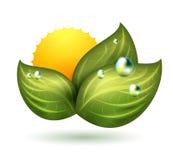 Symbole vert Photo stock
