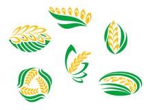 Symbolen van graangewasseninstallaties Stock Foto's