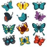 Symboler för vektor för beståndsdel för design för garnering för fjärilsarttyper ställde in vektor illustrationer
