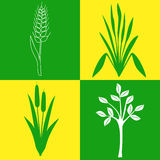 Symboler med växter Arkivfoto