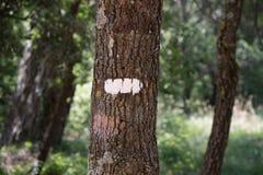 Symboler och undertecknar in skogbanorna Fotografering för Bildbyråer