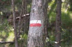 Symboler och undertecknar in skogbanorna Arkivfoto