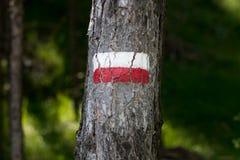 Symboler och undertecknar in skogbanorna Arkivbild