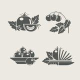 symboler ställde in tomaten Royaltyfria Foton