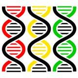 Symboles d'ADN. Illustration de vecteur. Photographie stock libre de droits